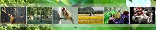 TESS: Transactional Environmental Support System